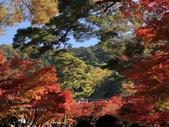 京都 永觀堂/福林寺 楓紅層層:IMG_9953.JPG