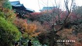 日本京都東福寺賞楓2016:DSC_2433.jpg