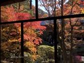 京都 永觀堂/福林寺 楓紅層層:IMG_0038.JPG