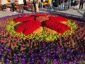 中正紀念堂樂活玩花創意無限花毯展示:122601059_3591997150863874_4445998188854506770_n.jpg