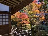 京都 永觀堂/福林寺 楓紅層層:IMG_0035.JPG