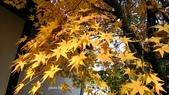 日本京都東福寺賞楓2016:DSC_2414.jpg