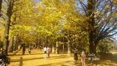 日本東京昭和公園~銀杏並木大道:073.jpg