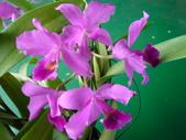 我的花花世界:每年十月開花~蘭花