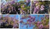 紫藤花~一日遊景點:-11.jpg