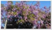 紫藤花~一日遊景點:DSC_0210.jpg