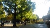 日本東京昭和公園~銀杏並木大道:032.jpg