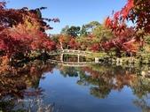 京都 永觀堂/福林寺 楓紅層層:IMG_0098.JPG