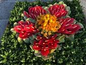 中正紀念堂樂活玩花創意無限花毯展示:122832832_3591997340863855_3676594852331901974_n.jpg