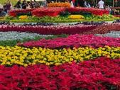 中正紀念堂樂活玩花創意無限花毯展示:122578711_3591996960863893_5804655753722456096_n (1).jpg