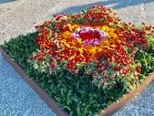 中正紀念堂樂活玩花創意無限花毯展示:122433170_3591997844197138_7966581270486150643_n.jpg