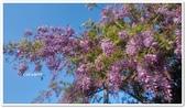 紫藤花~一日遊景點:DSC_0216.jpg