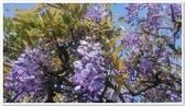紫藤花~一日遊景點:DSC_0195.jpg