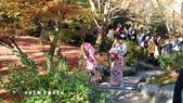 日本京都東福寺賞楓2016:DSC_2429.jpg