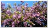 紫藤花~一日遊景點:DSC_0214.jpg
