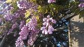 紫藤花~一日遊景點:DSC_0208.jpg
