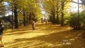日本東京昭和公園~銀杏並木大道:045.jpg