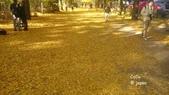 日本東京昭和公園~銀杏並木大道:042.jpg