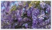 紫藤花~一日遊景點:DSC_0188.jpg
