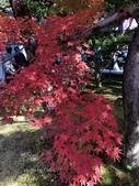 京都 永觀堂/福林寺 楓紅層層:IMG_0030.JPG