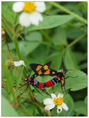 自然野趣:PA230042.jpg