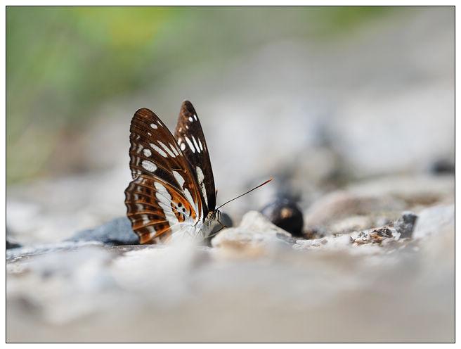 蝴蝶100:A7010139.jpg