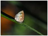 蝴蝶100:A2160100.jpg