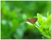 蝴蝶100:PA090055.jpg