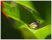 蝴蝶100:PC140171.jpg