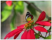 蝴蝶100:PC140338.jpg