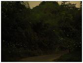 自然野趣:P4190009.jpg