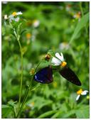 蝴蝶100:P6020352.jpg