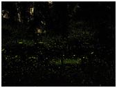 自然野趣:P4190005_11.jpg