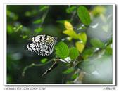 蝴蝶100:P1270372_title.jpg