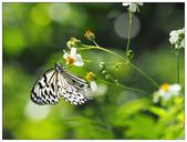 蝴蝶100:AC030195.jpg