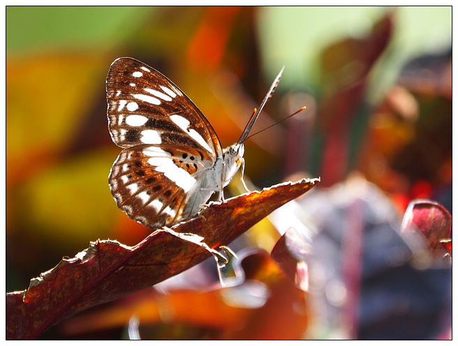 蝴蝶100:A7010175_2.jpg