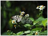 蝴蝶100:AC030190.jpg