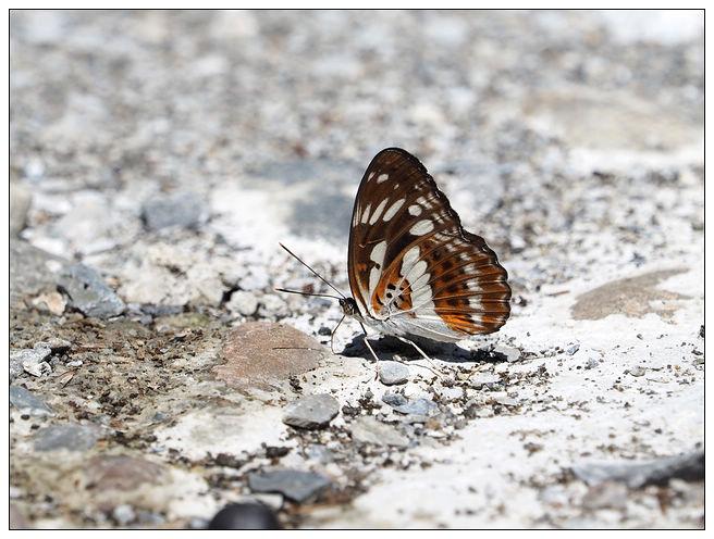 蝴蝶100:A7010186.jpg