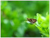 蝴蝶100:PA090056.jpg