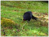 自然野趣:P3310164.jpg