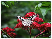 蝴蝶100:PB150163_副本.jpg