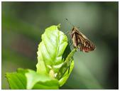 蝴蝶100:PB060121.jpg