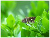 蝴蝶100:PA090058.jpg