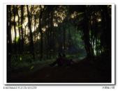 自然野趣:P4190012_title.jpg