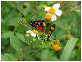 自然野趣:PA230036.jpg
