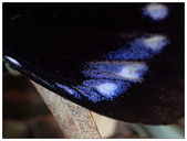 蝴蝶100:P9300022_1.jpg