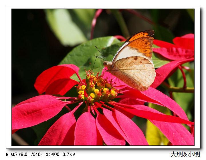 蝴蝶100:PC010121_title.jpg