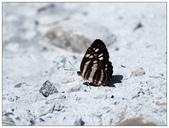 蝴蝶100:A7010149.jpg