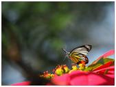 蝴蝶100:PC140832.jpg