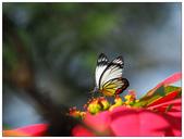 蝴蝶100:PC140834.jpg